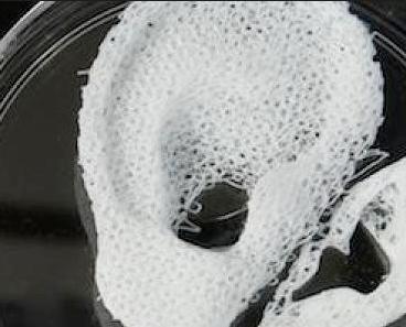 3d Bioprinting Companies