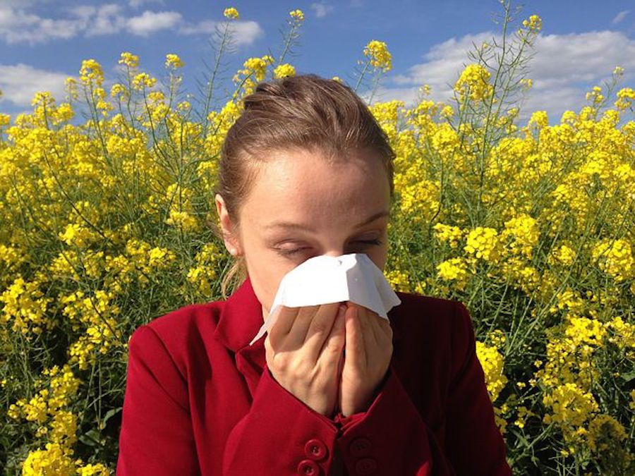 allergic asthma response to allergens