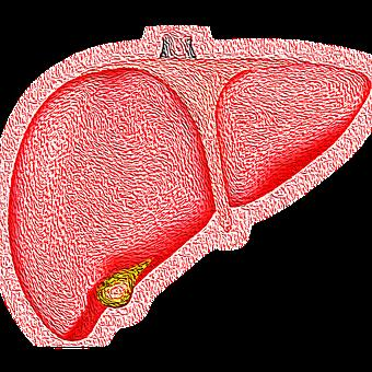 Best and Worst Foods for your Liver
