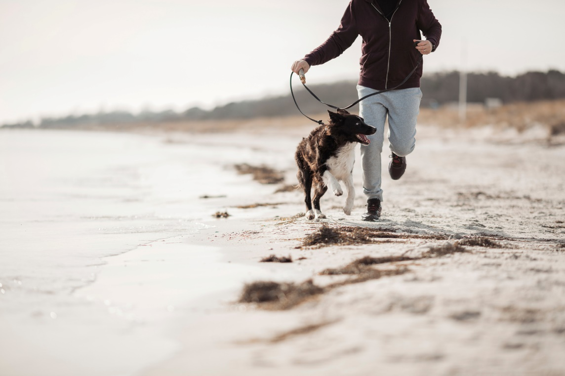 Importance Of Having A Pet In Your Life